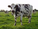 Proposer cette annonce : MANCHE. Exploitation laitière 150 hectares.