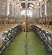 VENDU EN 2015. CALVADOS, lait 670 000 litres sur 157 hectares