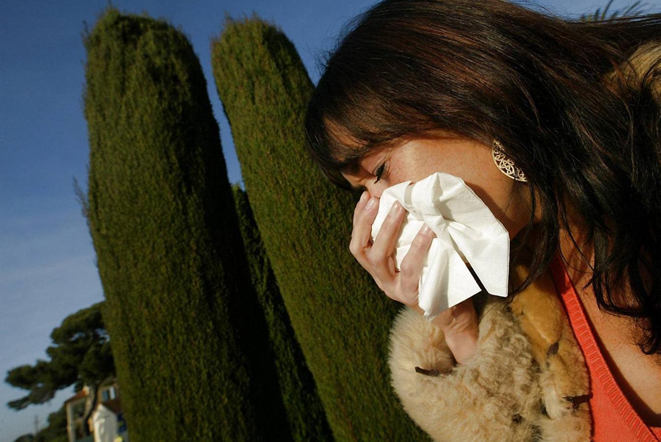 Risque élevé d'allergie aux pollens de cyprès cette semaine dans le Var