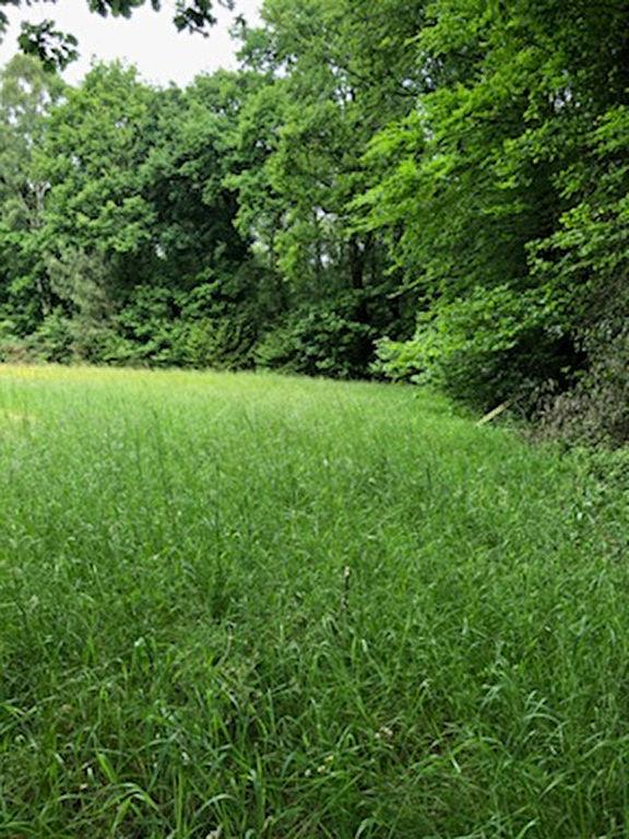 terrain 33969160 photo 2
